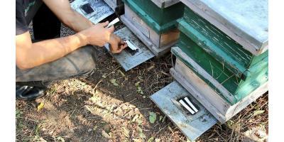 Este important sa tratezi familiile de albine la timp