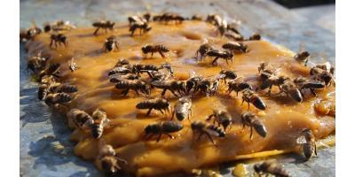 Turte pentru albine facute acasa? Ce trebuie sa stii pentru acest lucru!