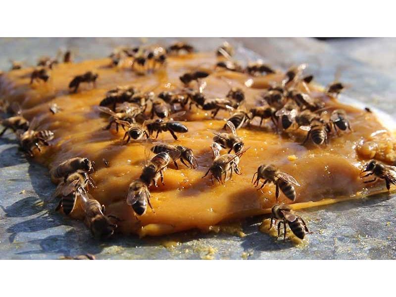 Care este cea mai potrivita turta pentru albine?!