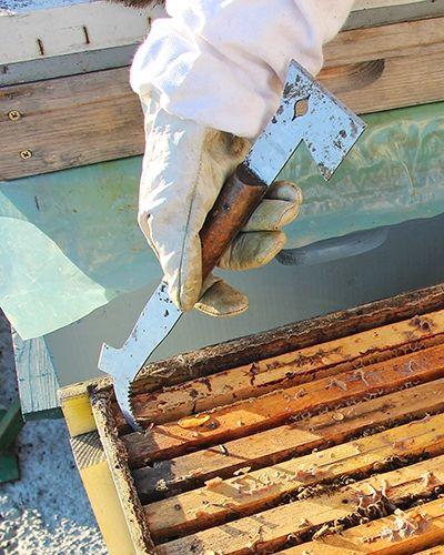 Dalti apicole